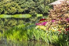 Waterside tulips flowers Stock Photos