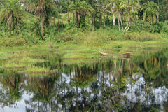 Waterside vegetation in the Kabwoya Wildlife Reserve Stock Image