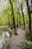 Waterside willows in spring breeze,Chengdu Royalty Free Stock Photos