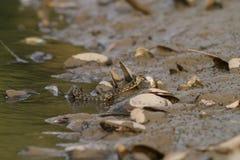 Waterslang op de rivier Stock Foto