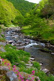 Watersmeet near Lynmouth Devon. Walk from Lynmouth towards Watersmeet [1 3/4 mile] and you will follow the River Lyn and this beautiful walk Royalty Free Stock Images
