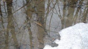 Waterspiegel in beek met smeltend ijs in de lente stock videobeelden