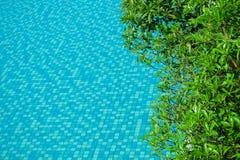 Waterspiegel met groene bladeren rond zwembad stock fotografie