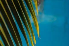 Waterspiegelachtergrond met palmverlof Stock Afbeelding