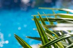 Waterspiegelachtergrond met palmverlof Stock Foto's