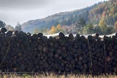 Waterstapel van logboeken stock fotografie