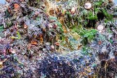 Waterstromen op bemost met verschillende installatiesoppervlakte worden overwoekerd van fontein die royalty-vrije stock fotografie
