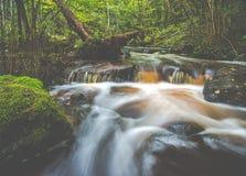 Waterstroom in bos stock afbeeldingen