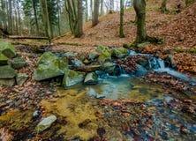 Waterstroom in het bos Stock Afbeelding