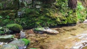 Waterstroom in zwart bos stock foto's