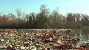 Waterthrush septentrional se baña en el lago Otoño En la orilla son las hojas secas almacen de video