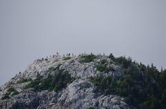 Waterton park narodowy Zdjęcia Royalty Free