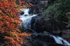 Waterval Stock Afbeelding
