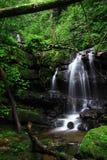 Waterval in bos Stock Fotografie