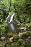 Waterval in bos royalty-vrije stock foto's