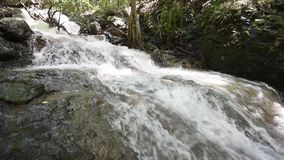 Waterval in bos Tropisch stock video
