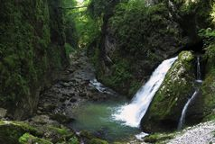 Waterval in Cheile Galbenei in de bergen van Bihor carst in Apuseni in Roemenië Stock Foto