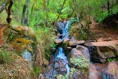 Waterval in de Dandenong-Waaiers Royalty-vrije Stock Fotografie
