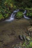 Waterval in de herfstbos Stock Fotografie