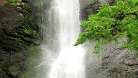 Waterval in de rotsen behandelde bomen stock videobeelden