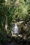 Waterval in de tropische wildernissen stock afbeelding