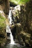 Waterval in de wildernis. Stock Afbeeldingen