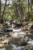 Waterval dichtbij Bariloche, Argentinië Stock Foto's
