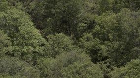 Waterval die over Klip stromen stock videobeelden