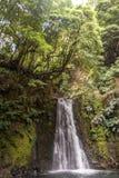 Waterval die van de klip vallen die met dikke spruiten wordt gestippeld stock foto's