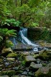 Waterval in diep bos Royalty-vrije Stock Foto's