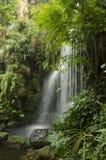 Waterval in diep bos royalty-vrije stock afbeeldingen