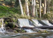 Waterval door boomstammen wordt omringd die Royalty-vrije Stock Fotografie