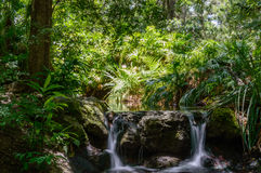 Waterval door het hout Royalty-vrije Stock Foto