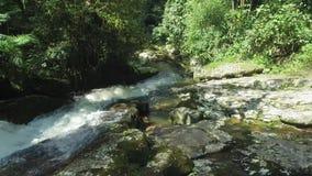 Waterval door hommel, wateren bij hoge snelheid in het midden van het bos over wordt geschoten dat stock video