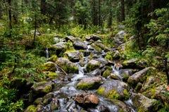 Waterval en bemoste keien in weelderig groen alpien bos royalty-vrije stock fotografie