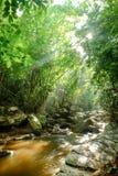 Waterval en het meest rainforrest Stock Fotografie