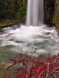 Waterval en installatie met rode kleine vruchten stock fotografie