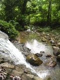 Waterval en rivier in diep hout stock foto's