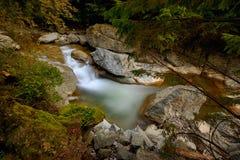 Waterval en stenen in Nationaal Park, Roemenië royalty-vrije stock foto