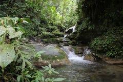 Waterval en stroom in regenwoud stock foto