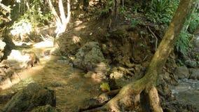Waterval en water die in tropisch bos stromen stock videobeelden