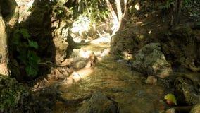 Waterval en water die in tropisch bos stromen stock footage