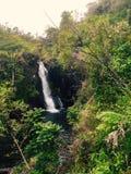 Waterval in Hawaï Stock Foto