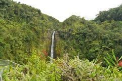 Waterval in Hawaï door vegetatie nat van de Regen wordt omringd die Royalty-vrije Stock Afbeelding