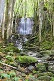 Waterval in het bos Royalty-vrije Stock Foto