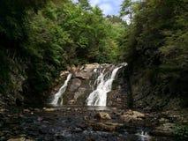 Waterval in het bos Stock Foto's