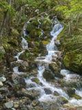 Waterval in het Bos van Patagonië Argentinië stock afbeeldingen