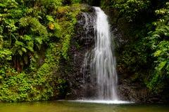 Waterval in het regenwoud van Martinique royalty-vrije stock foto's