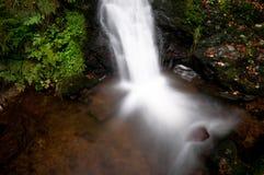 Waterval in het zwarte bos Stock Foto