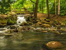 Waterval in hout groene bosstroom in oliva park Gdansk Stock Afbeeldingen